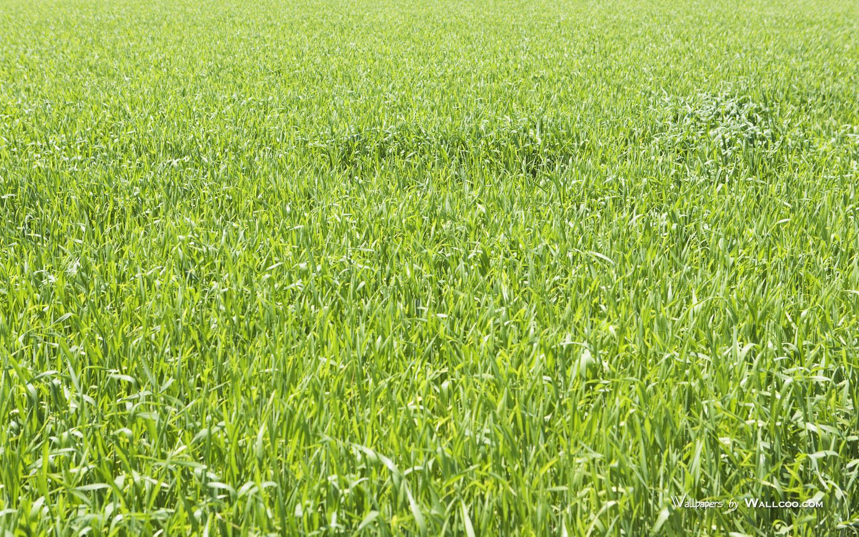 green-grassland-under-sky-photo-162