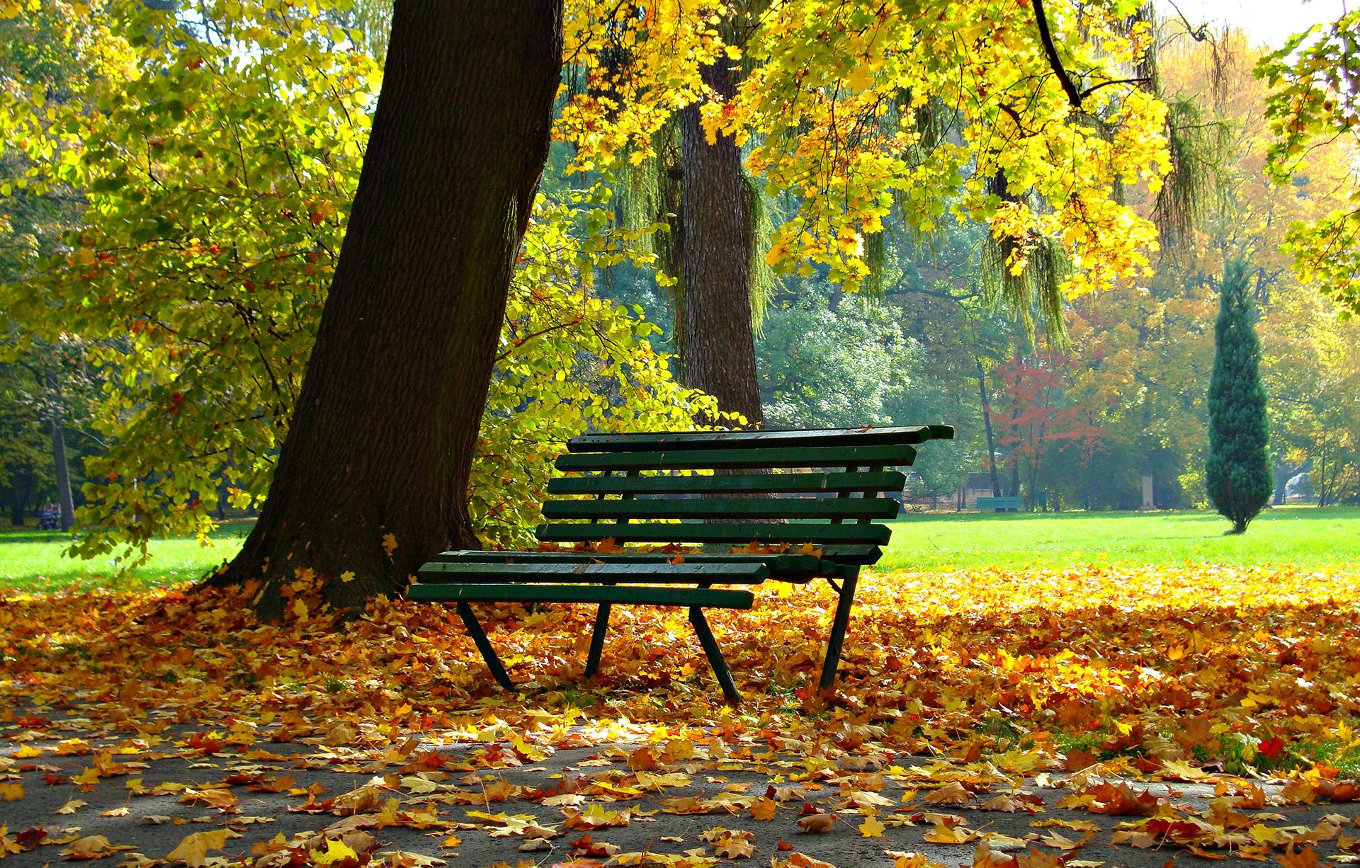autumn-1877749